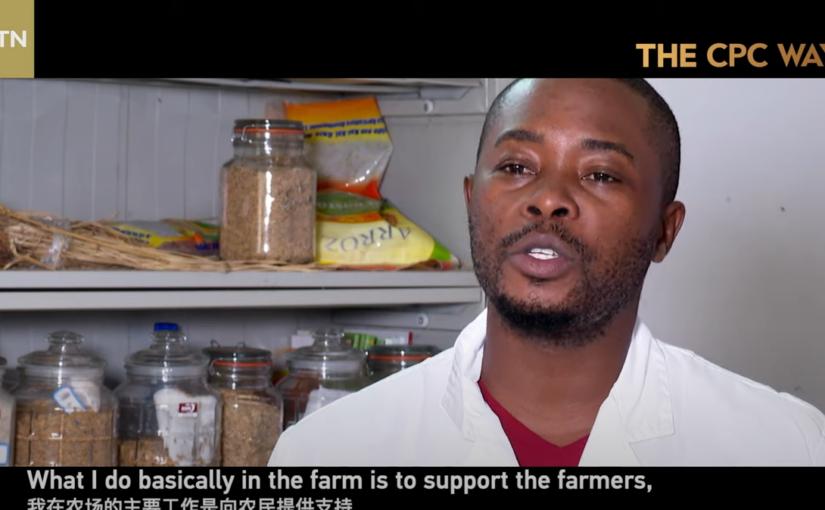 China contributes to Mozambique's rice revolution